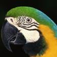 Profilový obrázek bubaku