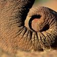 Profilový obrázek slonichobot