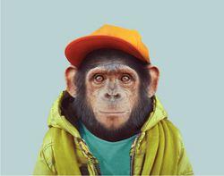 Profilový obrázek B.Pepin