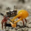 Profilový obrázek Mr. Crab