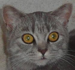 Profilový obrázek Pyntovon