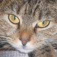 Profilový obrázek meeee