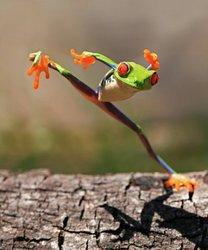 Profilový obrázek žabák