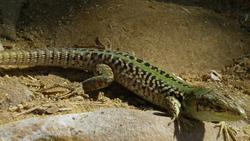 Profilový obrázek sadodisco