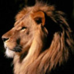 Profilový obrázek michi