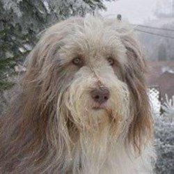 Profilový obrázek Iva Šimáková