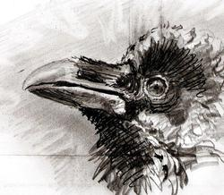 Profilový obrázek azbull