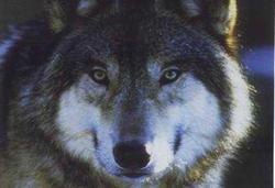 Profilový obrázek MetalFilm