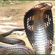 Profilový obrázek Kobra