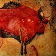 Profilový obrázek Rudý bizon