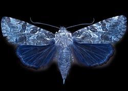 Profilový obrázek plackopes