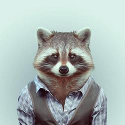Profilový obrázek raccoon