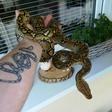 Profilový obrázek snake323