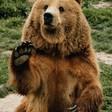 Profilový obrázek Medveď