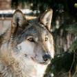Profilový obrázek Wolfat1