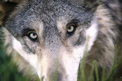 Profilový obrázek Vlkos4
