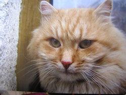 Profilový obrázek katinka011