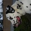 Profilový obrázek Lassie
