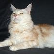Profilový obrázek Kocourr