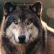 Profilový obrázek magdawolf