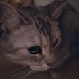 Profilový obrázek Laufor