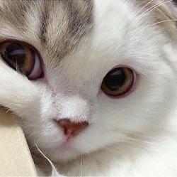 Profilový obrázek Šárii