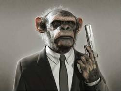 Profilový obrázek Diamond Monkey