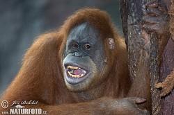 Profilový obrázek buderson