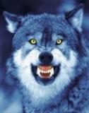 Profilový obrázek yvlk