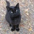 Profilový obrázek straycat