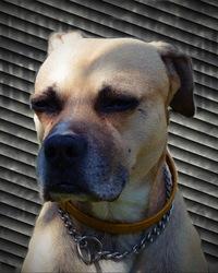 Profilový obrázek Secretdandelion