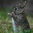 Profilový obrázek Bunny Terror