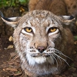 Profilový obrázek Tuili the Cat