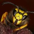 Profilový obrázek Vosí hnízdo