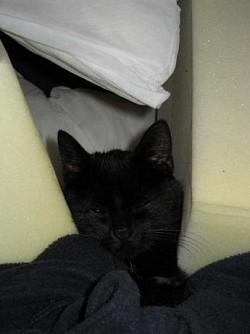 Profilový obrázek Catka