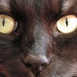 Profilový obrázek Cat Men