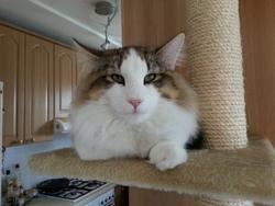 Profilový obrázek Pavcha