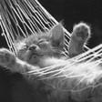 Profilový obrázek cica