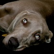 Profilový obrázek Lucina