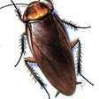 Profilový obrázek Roach Sodomizer