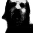 Profilový obrázek zifi1