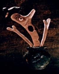 Profilový obrázek kuror