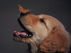 Profilový obrázek butterflypunker