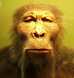 Profilový obrázek MJpithecus