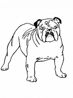 Profilový obrázek The Sníížek