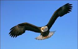 Profilový obrázek Eagle