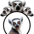 Profilový obrázek Lemurník