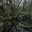 Profilový obrázek mlhy nad pralesem