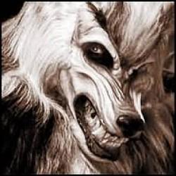Profilový obrázek foxi