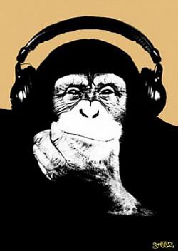 Profilový obrázek Funky Monkey